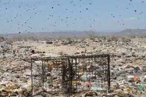 birds fly over a landfill with and rusting metal cage in the middle of the frame