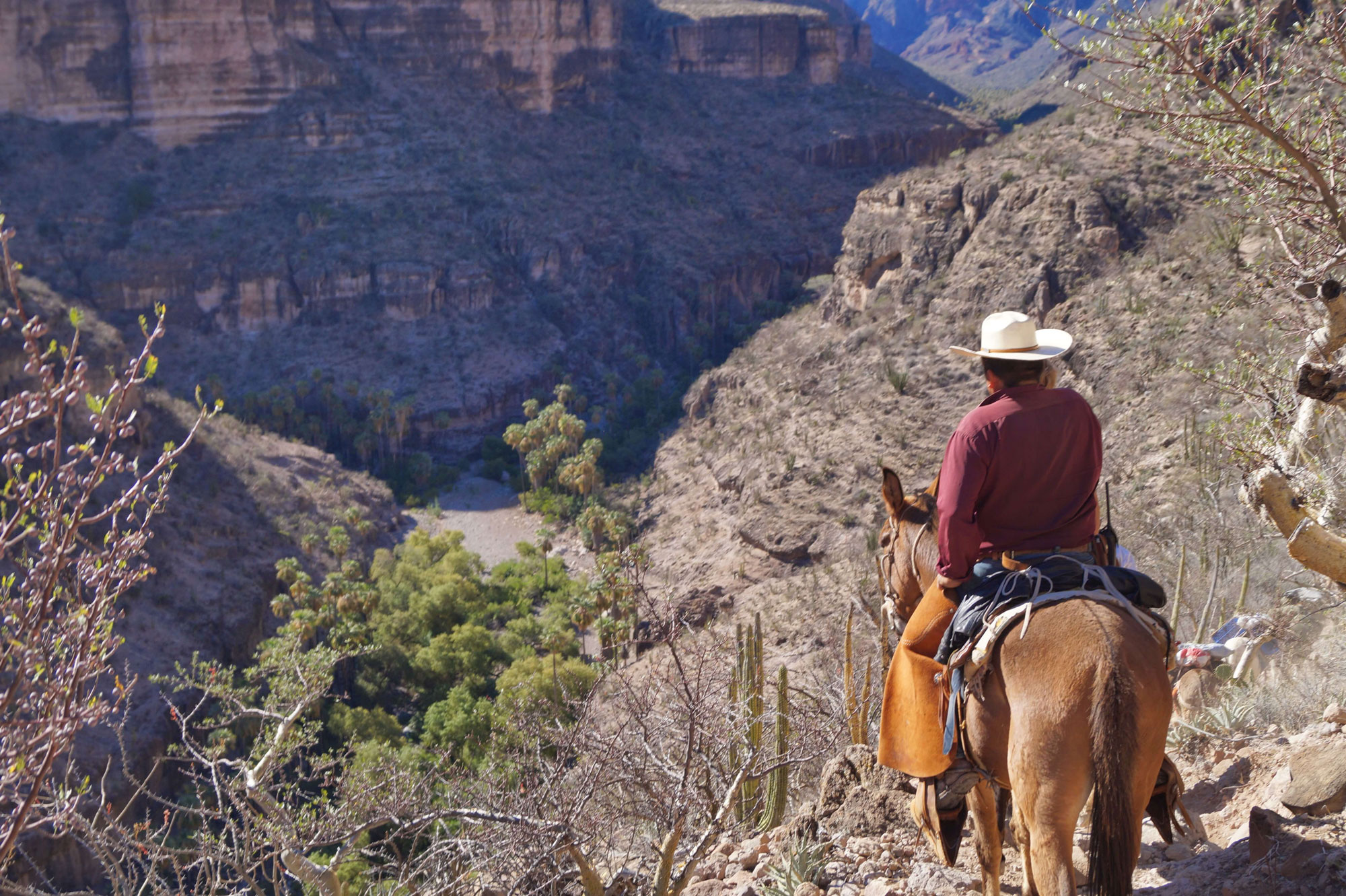 A person in a white cowboy hat and maroon button-up sits on a horse. They are staring out at an arid desert landscape with plants in the foreground and canyon walls in the background.
